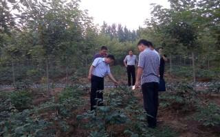 漯河市经济林和林木种苗工作站 对全市苗木进行抽查