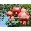 如意软籽石榴,软籽石榴等各种石榴苗的价格