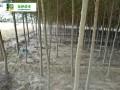 白榆树基地