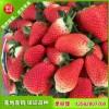 丰香草莓苗怎么卖 草莓苗那个品种好