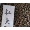 专供优质杜英种子 江西杜英种子价格 量大价格低