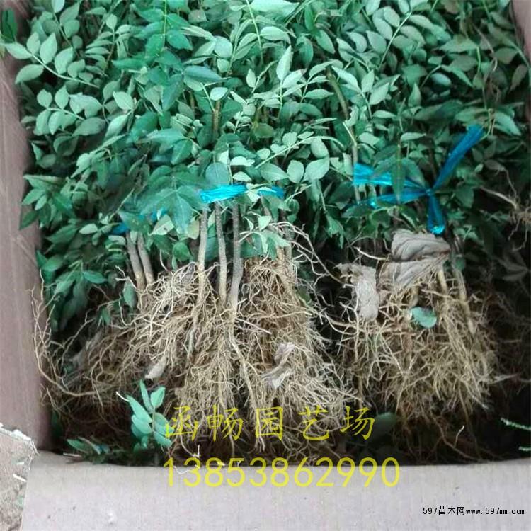 大树通过锯截、移栽,伤口多,萌芽的树叶嫩,树体的抵抗力弱,容易遭受病害、虫害,如不注意防范,造成虫灾或树木染病后可能会迅速死亡,所以要加强预防。刚长出的枝叶极易引发蚜虫为害,可用多菌灵或托布津、敌杀死等农药混合,稀释1200倍药液喷施防治。分4月、7月、9月三个阶段,每个阶段连续喷本次药,每7天一次,正常情况下可达到防治的目的。
