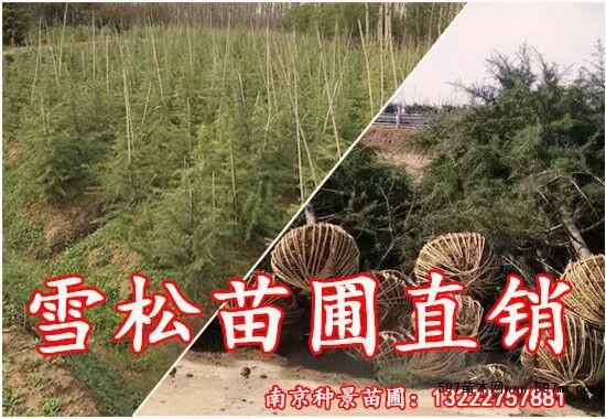 浅析雪松苗木行业即将呈现的五大发展趋势