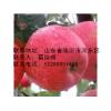 苹果苗最优品种,苹果苗最低价格,苹果苗大量供应