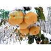 梨树苗的最低价格 梨树苗的最新品种