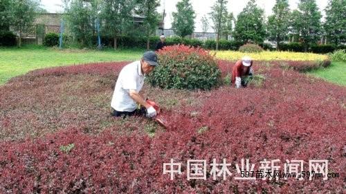 时事新闻 正文               连日来,贵州省威宁自治县草海泰丰园的