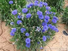 花卉苗木种子网