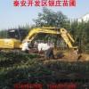 现挖现卖北海道黄杨价格  自产自销北海道黄杨多少钱一棵