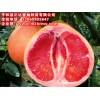 哪里的三红蜜柚苗比较正宗,哪里有卖三红蜜柚苗,正达蜜柚苗场
