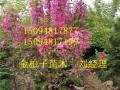 供應北美海棠苗