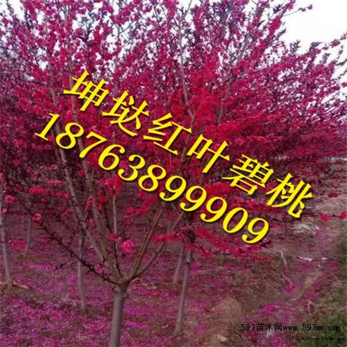 中国最贵的树木品种