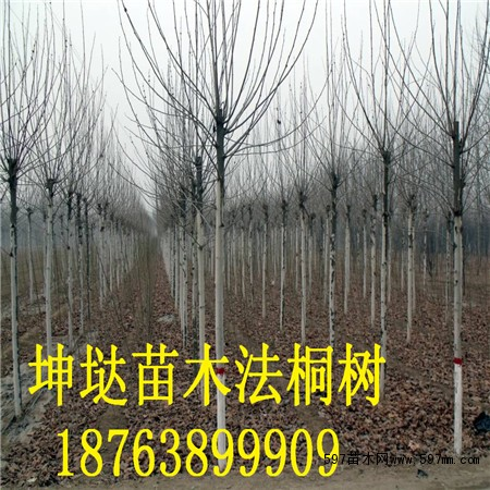 球形苗木造型图片大全