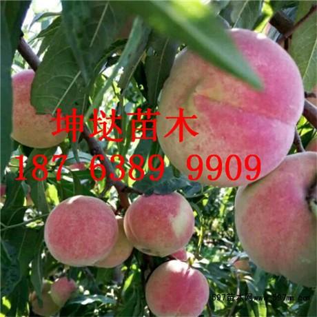桃苗价格,桃树苗价格,桃树苗多少钱一棵