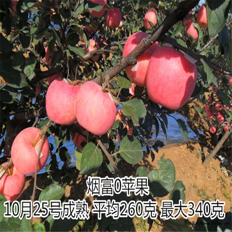 苹果果实的发育和结构图片