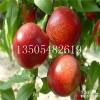1~3公分锦绣黄桃、中油4号桃树苗哪里有卖的=怎么卖