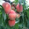 1~3公分晚熟桃树苗哪里有卖的==什么品种好=果树苗供应