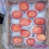 紅富士蘋果樹苗價格 煙富0蘋果樹苗價格 煙富3蘋果樹苗價格