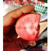 红色之爱红肉苹果苗价格  苗圃直销高产红肉苹果树苗价格