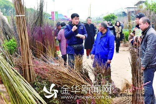 597苗木网 行业资讯 时事新闻 03 正文        2月3日,是中国传统二