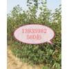 供應10公分柿子樹*8公分柿子樹*6公分柿子樹量大價低