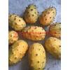 火参果种子出售 火星果非洲蜜瓜