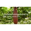 奇瓜异果红香蜜种子批发供应