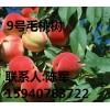 供应北京9号毛桃桃树 批发价2018桃苗价格