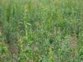 石榴苗 红巨蜜石榴苗供应