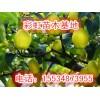 8公分梨树-9公分梨树-10公分梨树价格