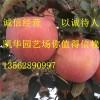 2001苹果苗_2001苹果苗价格_2001苹果苗批发/采购