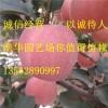 新2001苹果苗 苹果苗新品种 新2001苹果苗价格