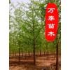 銀杏樹,美國紅楓,紫葉李,櫻花,合歡
