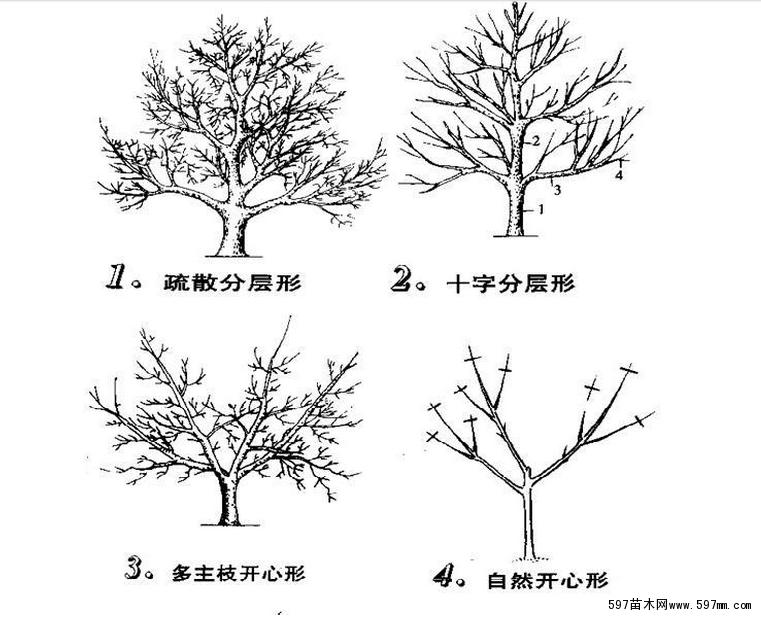 树从简笔画