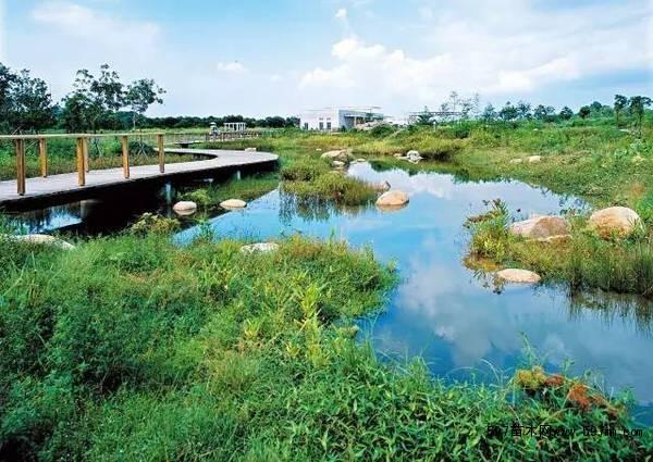 湿地景观设计_湿地景观开发_湿地景观植物配置