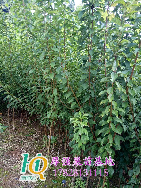 壁纸 成片种植 风景 树 植物 种植基地 桌面 1024_1365 竖版 竖屏