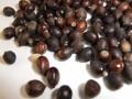 红豆杉种子