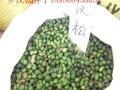 罗汉松种子