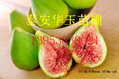 大青皮无花果苗西丰县供应