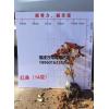 福建红桑袋苗批发,漳州红桑袋苗报价,红桑袋苗批发销售