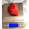 草莓苗多少钱 草莓苗多少钱一颗 哪里草莓苗价格便宜