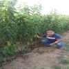 樱桃苗规格  樱桃苗品种  3厘米樱桃苗价格
