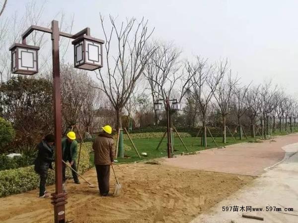 可根据苗木大小及片植情况,选用网状支撑,并在内部增加支撑杆,竹林