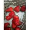 大量出售脱毒红颜草莓苗 好成活产量高