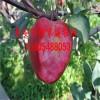 哪里有卖红肉苹果苗的  红肉苹果苗价格是多少