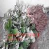 红颊草莓苗2017哪里便宜 红颊草莓苗哪里价钱低