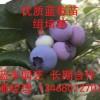 當前藍莓價格多少錢一斤