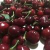 山东矮化樱桃树苗品种、山东矮化大樱桃树苗多少钱一棵