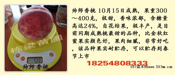 中油4号桃树小苗种植技术美早樱桃苗价格参考