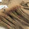 软籽石榴苗、软籽石榴树苗新品种、软籽石榴树树苗价格