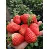吉林哪里有卖草莓苗、草莓苗出售